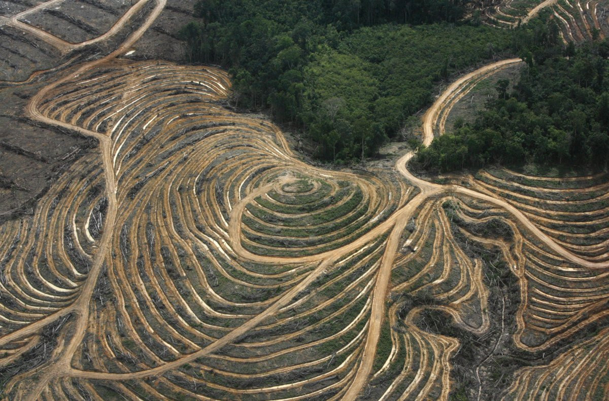 1417178799_carbon-spewing-power-plants-are-one-big-factor-in-global-emissions-but-deforestation-which-is-seen-here-in-indonesias-west-kalimantan-province-isnt-helping-either-trees-are.jpg