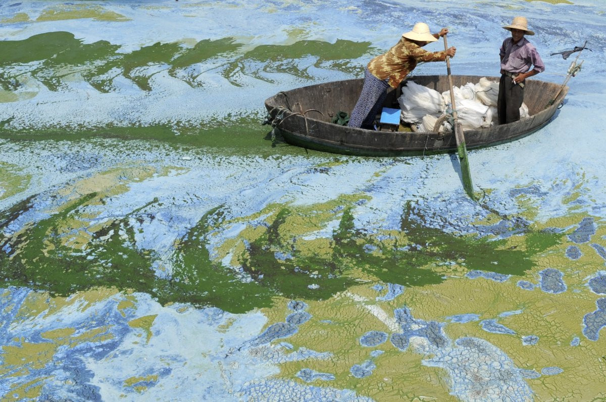 1417178893_one-way-climate-change-is-choking-aquatic-ecosystems-is-through-algae-blooms-brought-on-by-warming-waters-algae-blooms-produce-toxins-deadly-to-other-organisms-in-the-water.jpg