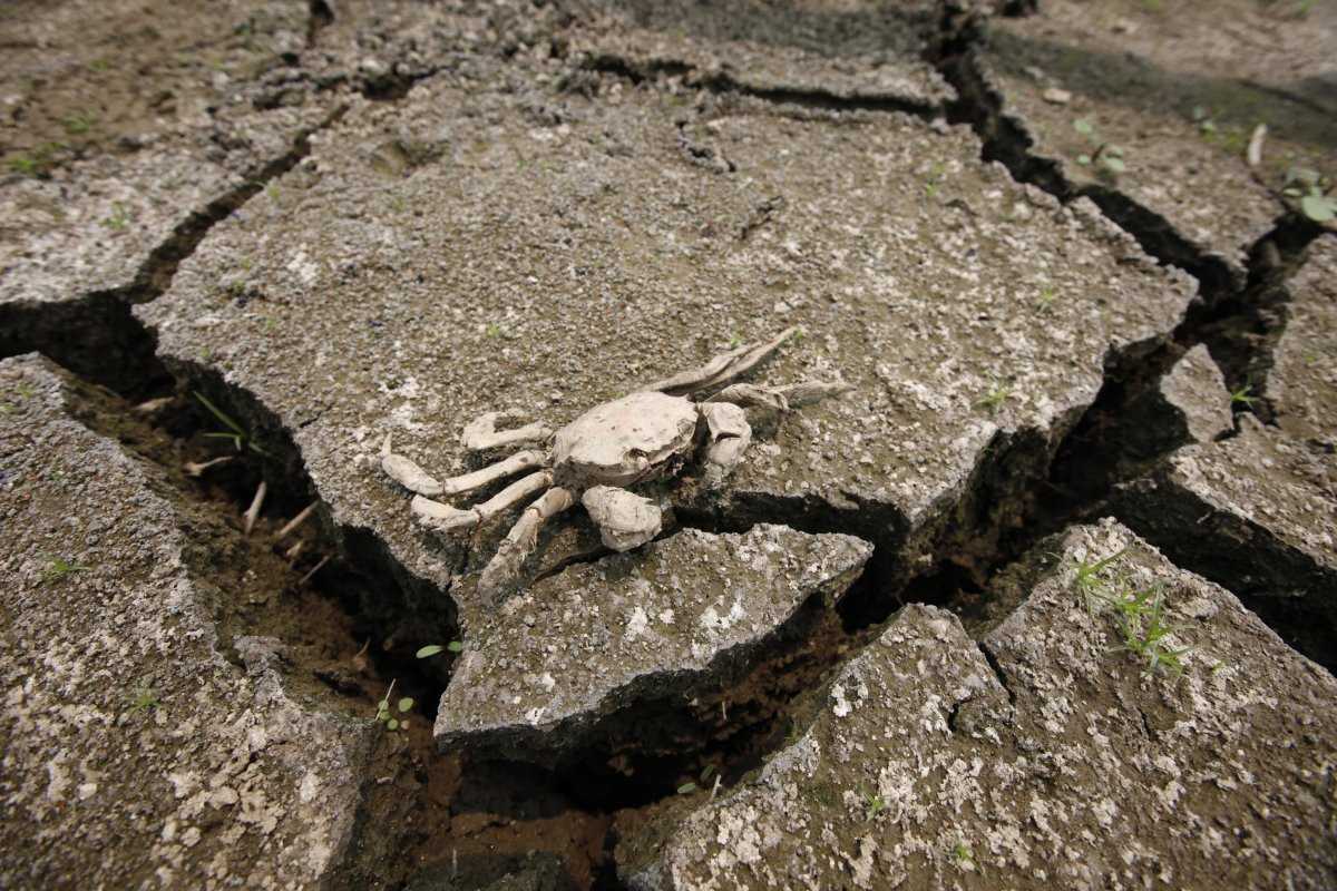 1417178920_rising-temperatures-are-expected-to-wreak-havoc-on-water-supplies-all-around-the-world-this-crab-carcass-is-sitting-on-a-dried-up-reservoir-near-seoul-south-korea-in-the-mi.jpg