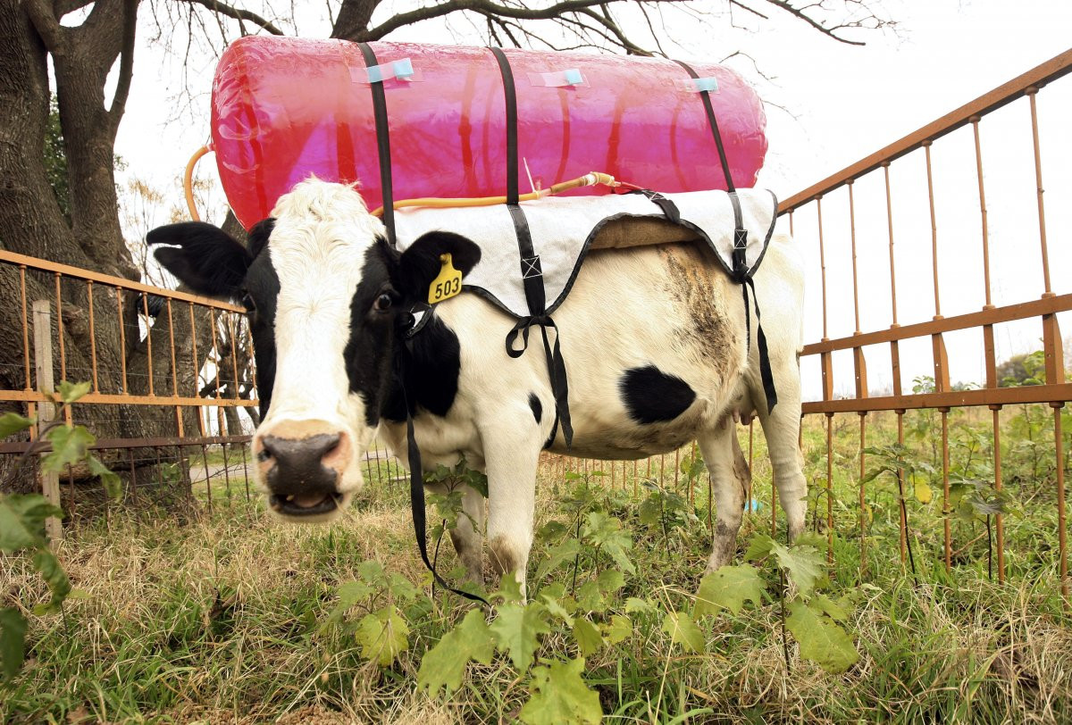 1417178932_the-cattle-industry-has-also-been-criticized-because-cows-belch-large-amounts-of-methane-a-gas-that-traps-about-20-times-more-heat-as-co2-into-the-atmosphere-in-2012-cows.jpg