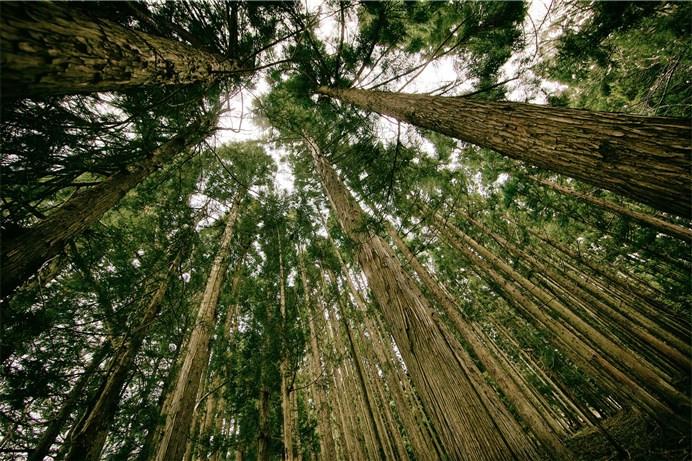 1421070759_y1hedioeroya666xcjyg-forest.jpg
