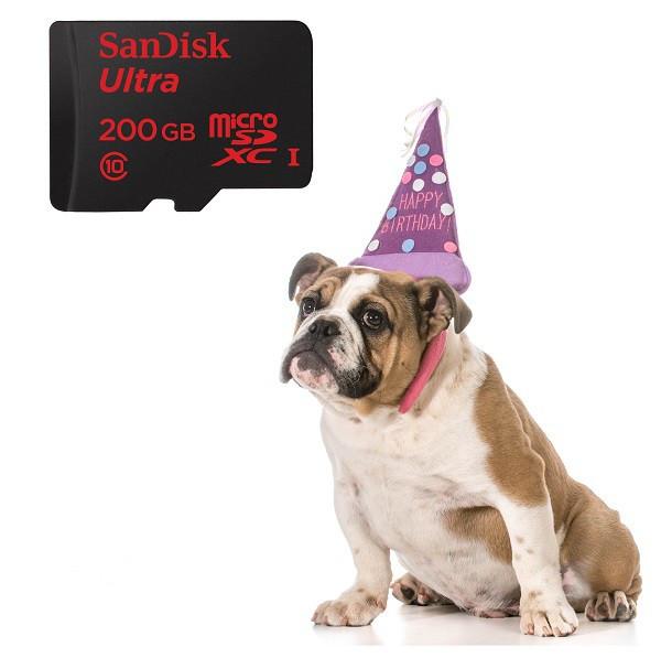 1436875574_dogbdaysandisk-600x597.jpg