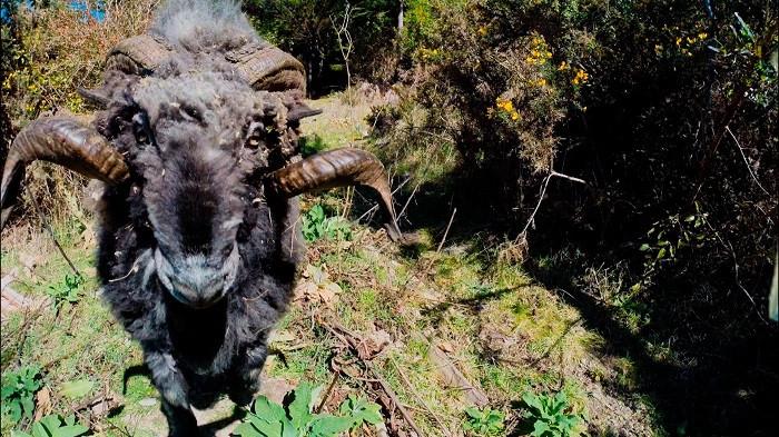 Hayvanların drone (insansız hava aracı) ile mücadelesi