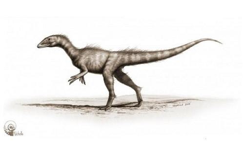 Dracoraptor Hanigani İsimli 200 Milyon Yıllık Dinazor Bulundu