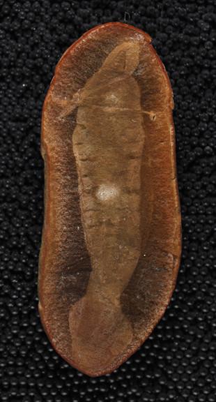 1458194470_holotype-fossil.jpg