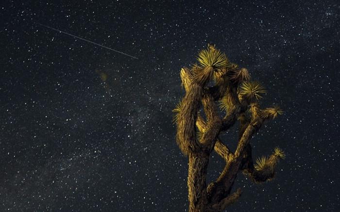 1470341230_perseid-meteor-usa2642224k.jpg