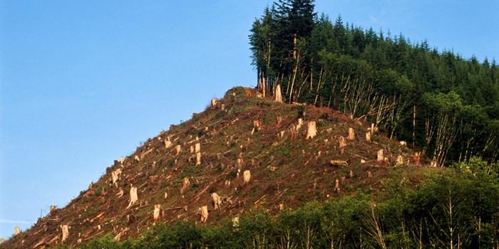1470672018_o-deforestation-facebook.jpg