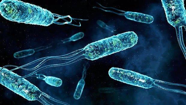 1472849296_bakteriresimleri11.jpg
