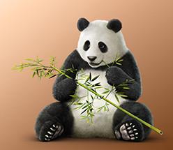 1481450854_panda2ptk7csfix1481294601.jpg