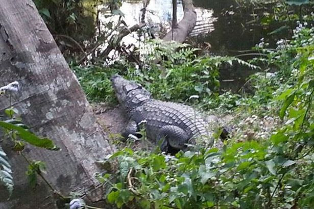 1483428205_the-frantic-aftermath-of-an-incident-that-saw-a-crocodile-bite-a-woman-who-was-taking-a-selfie-with-the-animal-2.jpg