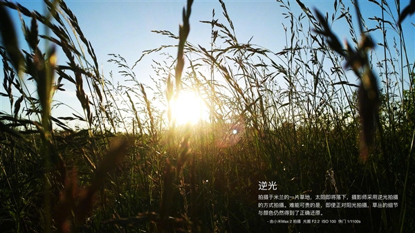 1496127040_mi-max-2-camera-sample-b.jpg
