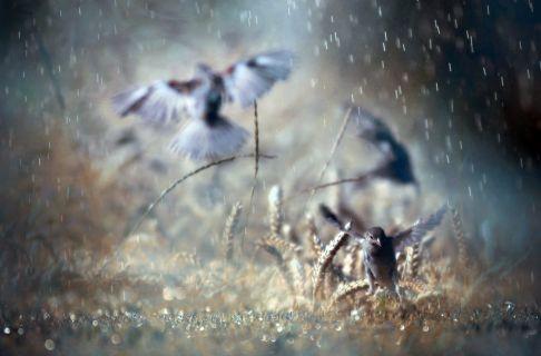 Yağmurun sesi ile rahatlayın
