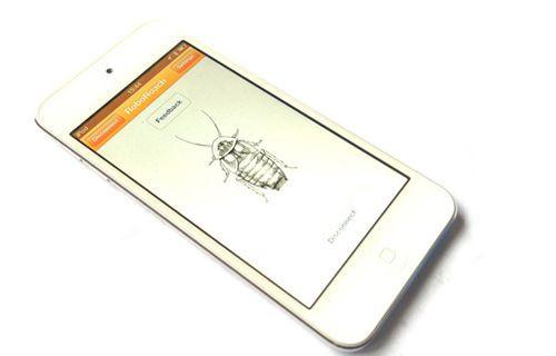 Canlı böceği telefonla kontrol ettiler!