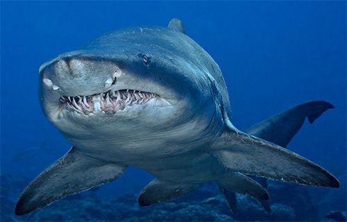 Bu giysi köpek balığı geçirmez!