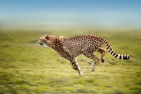 Turkcell Superonline ve Nat Geo ile Tanzanya'da safari macerası