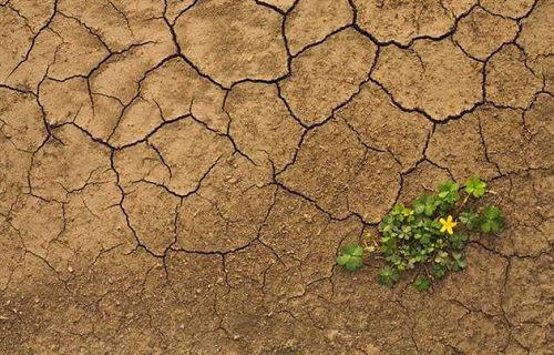Küresel ısınma Afrika'da aşırı kuraklıklara yol açabilir