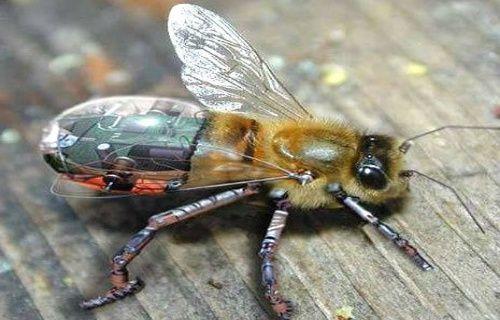 İnsanoğlu teknoloji sayesinde arılarla iletişim kurmayı başardı!