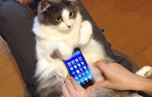 Asya'da son çılgınlık! Akıllı telefon kılıfı olarak canlı kedi ve tavşan kulllanıyorlar