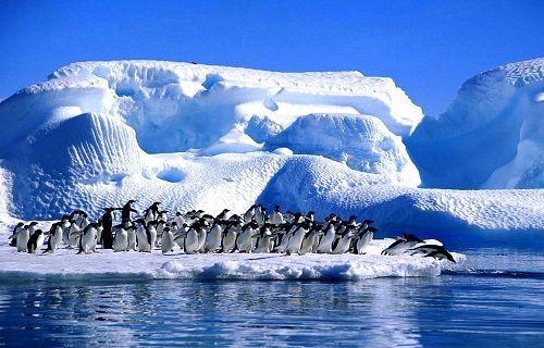 Türkiye penguenlerin kıtasında bilimsel istasyon kuracak