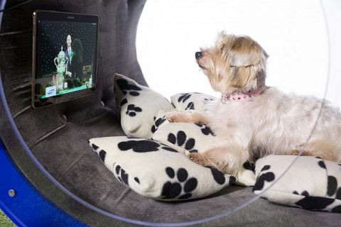 Samsung'dan 30.000 Dolarlık köpek kulübesi