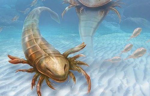 ABD'de insan boyunda akrep fosili bulundu
