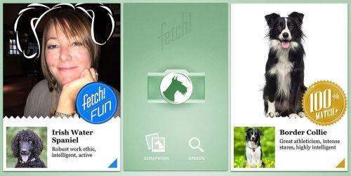 Microsoft Fetch adlı uygulama fotoğraflardan köpek cinsini tanıyor!