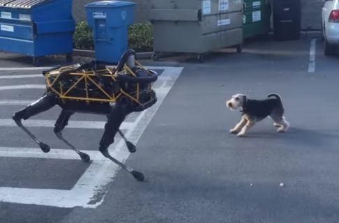 Patronun köpeği, patronun robotuna karşı!
