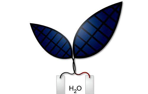 Harvard yakıt üreten biyonik yaprak geliştirdi