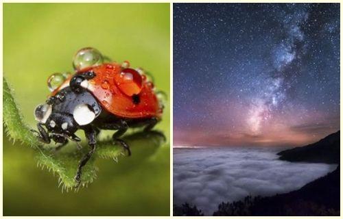 Uluslararası Bilim Fotoğrafları yarışmasından mükemmel fotoğraflar