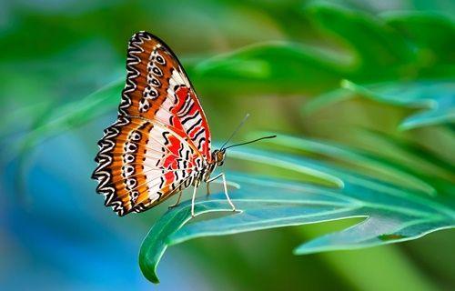 Kelebeklerin desen ve renklerini değiştirdiler!