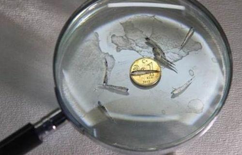 Türk bilim insanları yeni bir balık türü keşfetti!