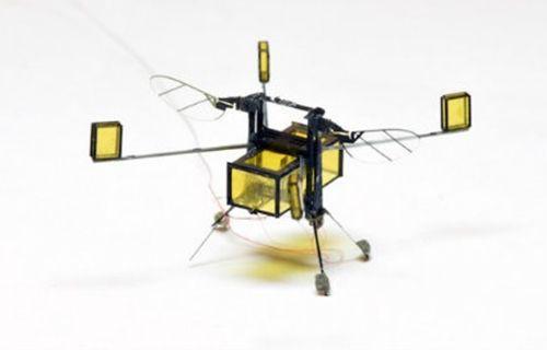 Uçabilen ve yüzebilen mini robot!