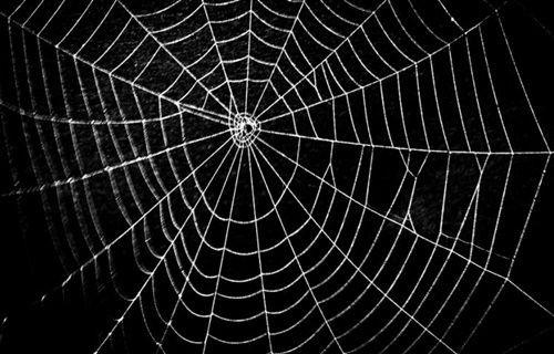 Örümcek ipeğinden hassas işitme cihazı!