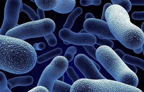 Bakteriden kayıt cihazı üretildi!