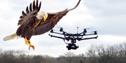 Drone Avcısı Kartallar Geliyor